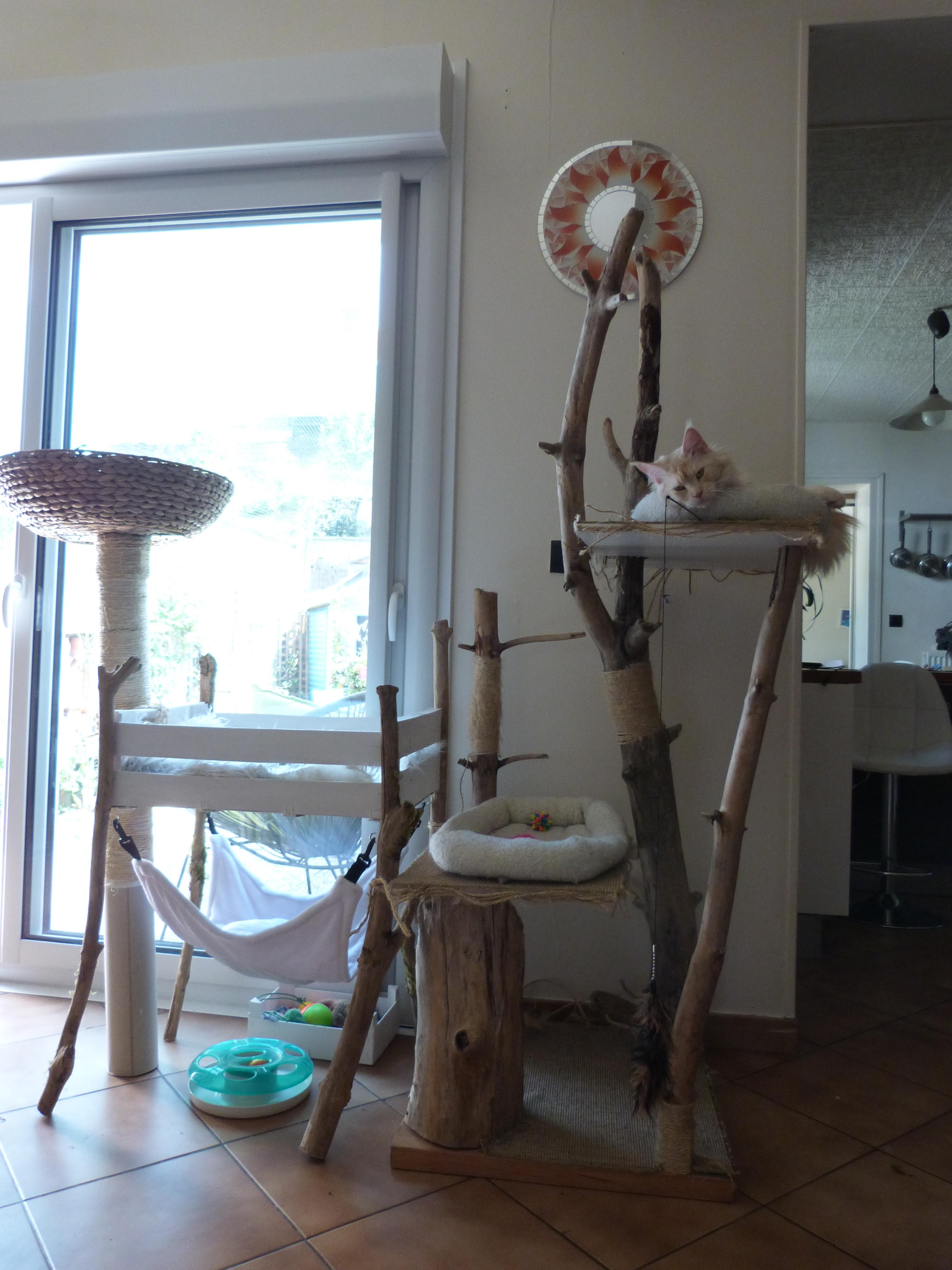 arbre chat fait maison arbre chat fait main sur le mur. Black Bedroom Furniture Sets. Home Design Ideas