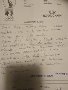 Jugement exposition Oki-Doki, maine coon femelle, chaton 4 mois, chatterie Coon Toujours, Saint André lez Lille, 2 décembre 2018