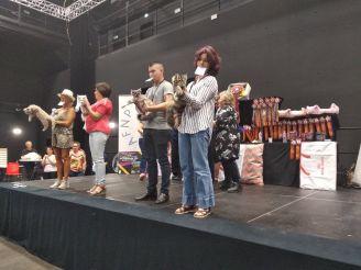 Exposition féline de Lesquin, 22 septembre 2019, Zazou, femelle maie coon, chatterie Coon Toujours