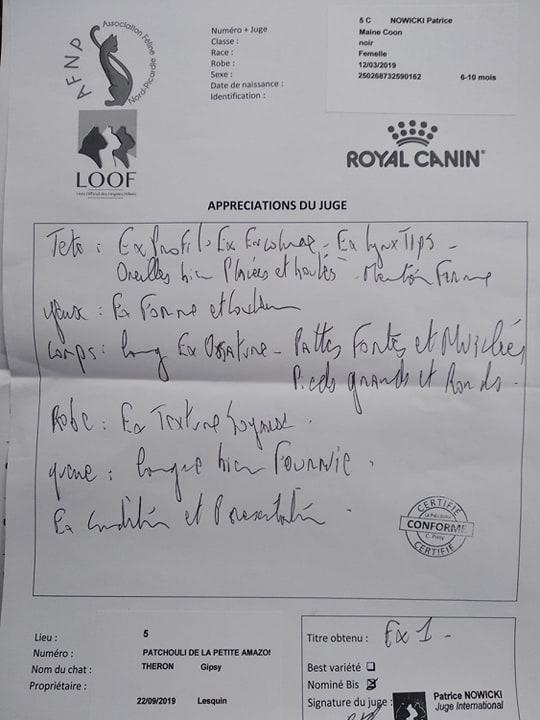 Exposition féline de Lesquin, 22 septembre 2019, Patchouli, femelle maie coon, chatterie Coon Toujours